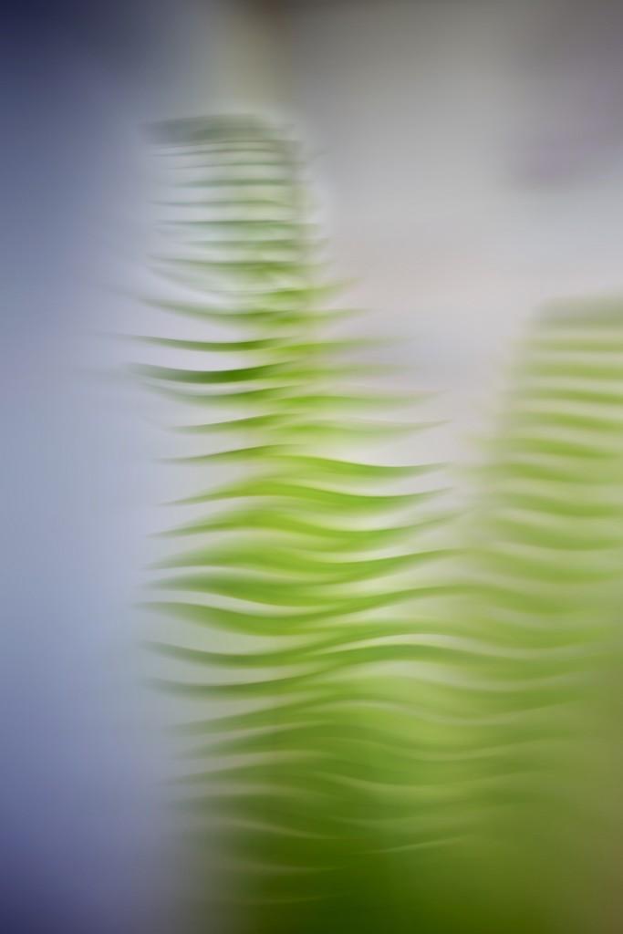 Dancing ferns  by joemuli