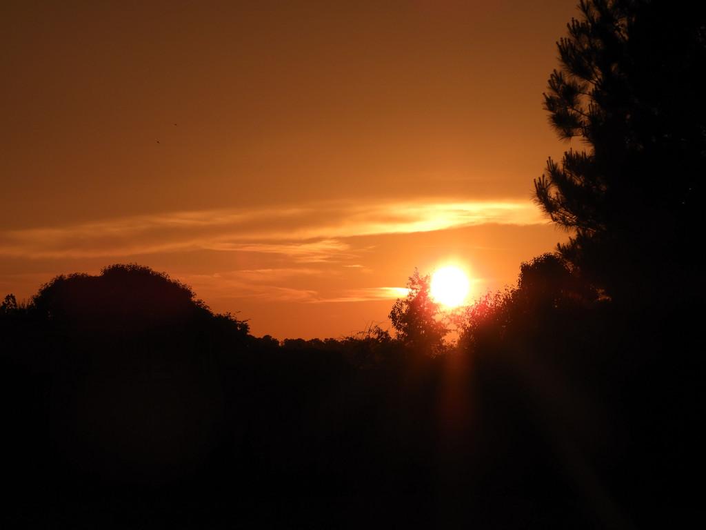 Sunset in orange by homeschoolmom