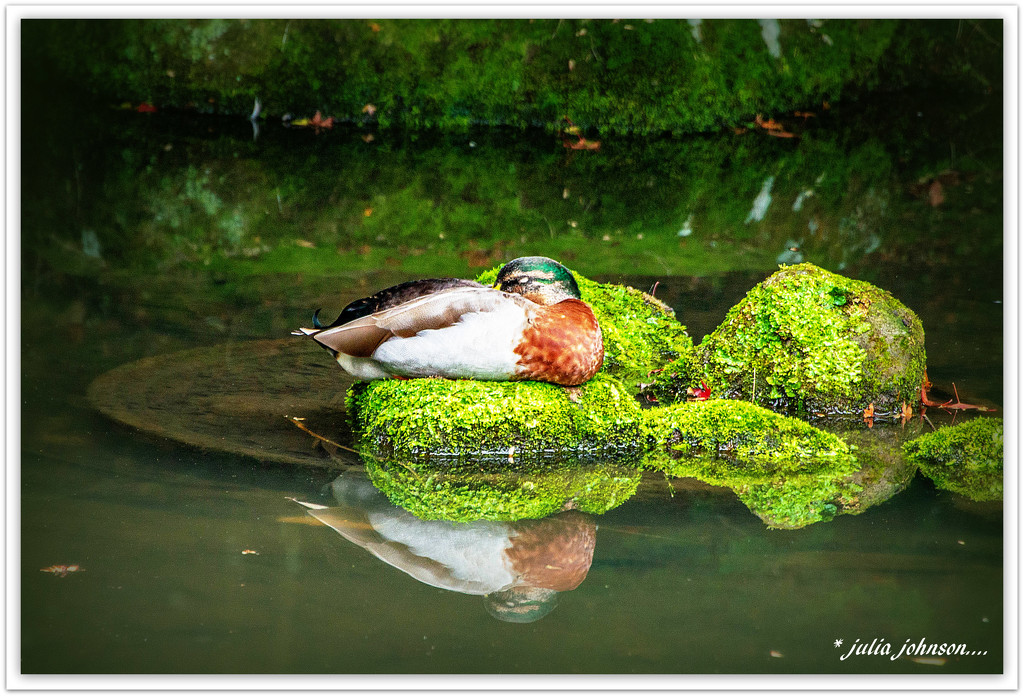 Peaceful Place... by julzmaioro