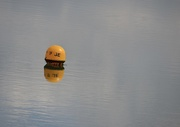6th May 2021 - Packman in the sea