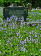 5th May 2021 - Spring in the Cemetery