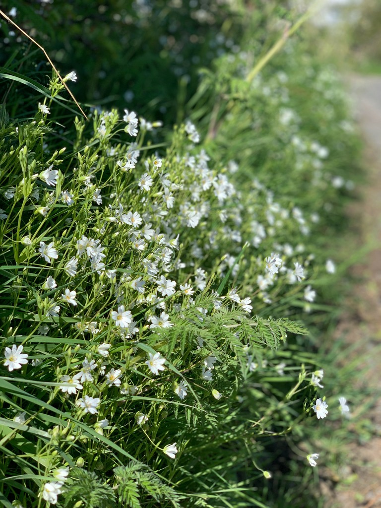 Hedgerow wild flowers by happypat