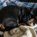 Sleeping Cosmo