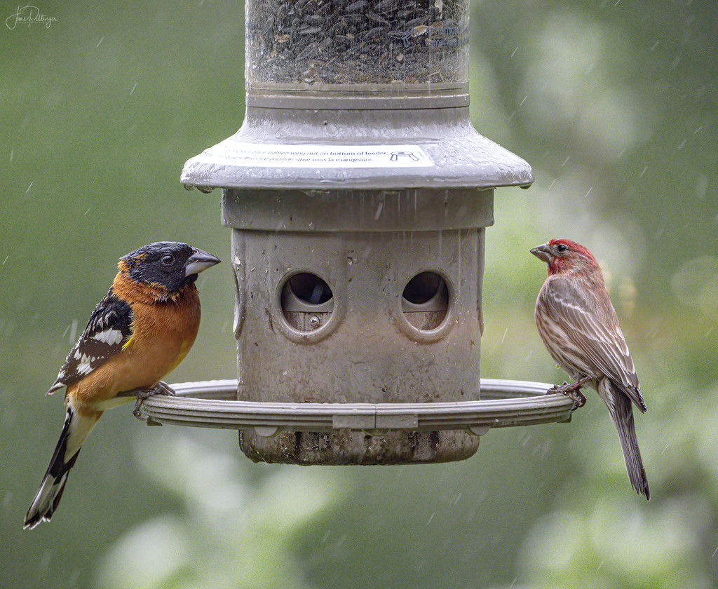 Two At the Feeder  by jgpittenger