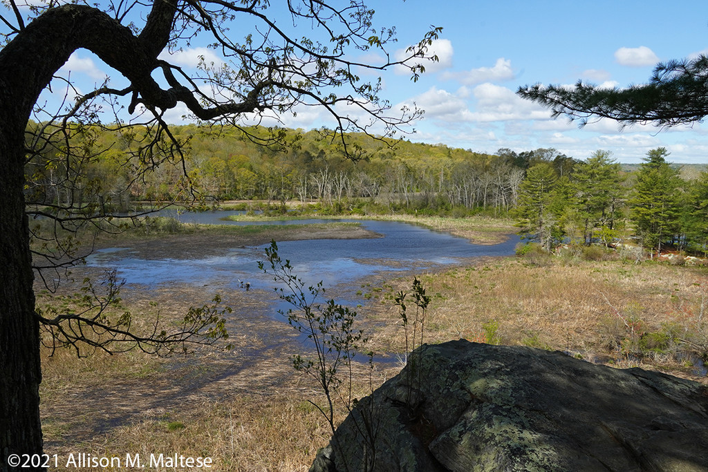 Selden Creek Preserve by falcon11