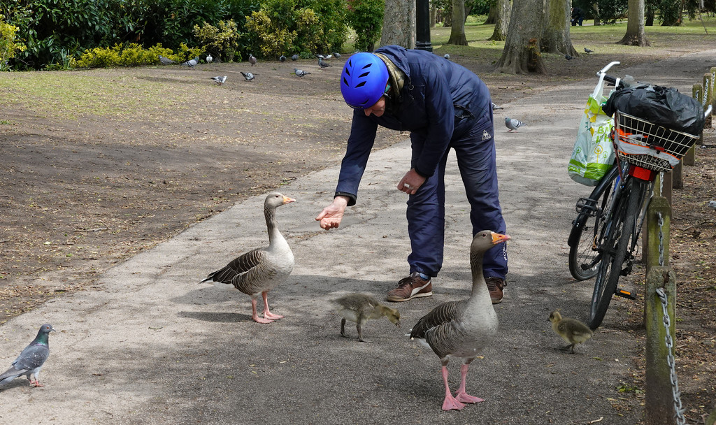 Feeding The Ducks (and Pigeon) by phil_howcroft