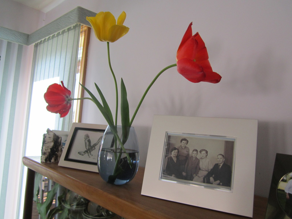 Tulips with an old family picture by bruni