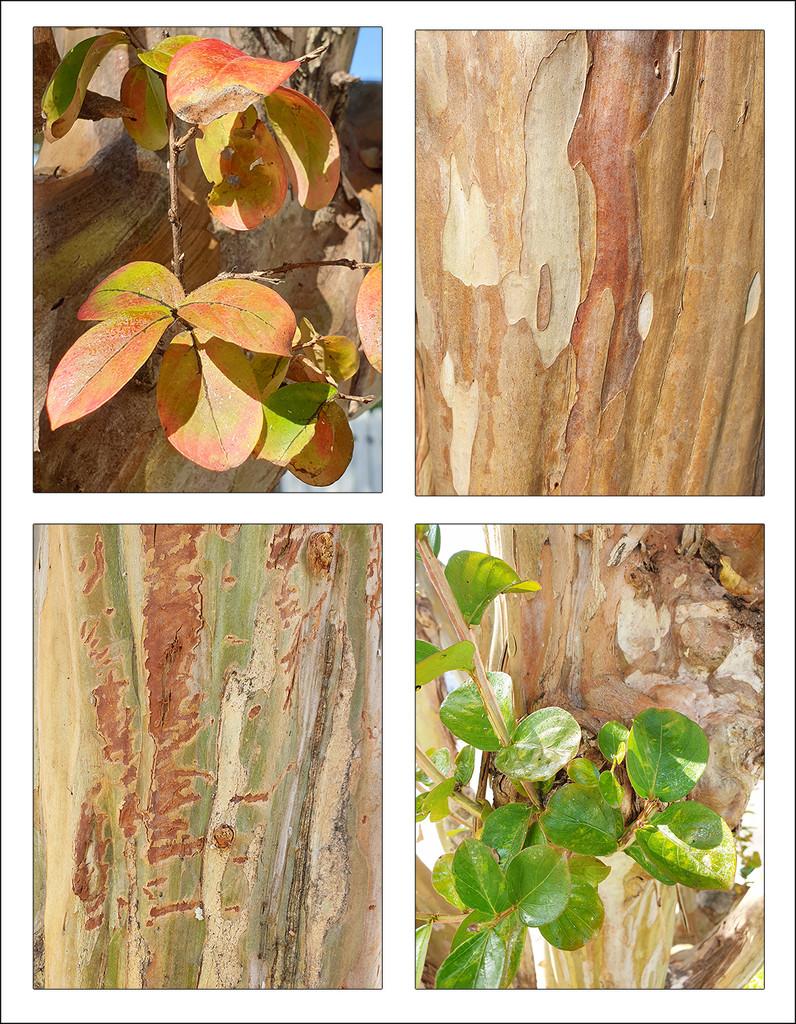 Tree Bark and Leaves by onewing