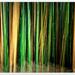 Bamboo ICM