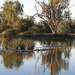 The lagoon at Bowra Wildlife Sanctuary
