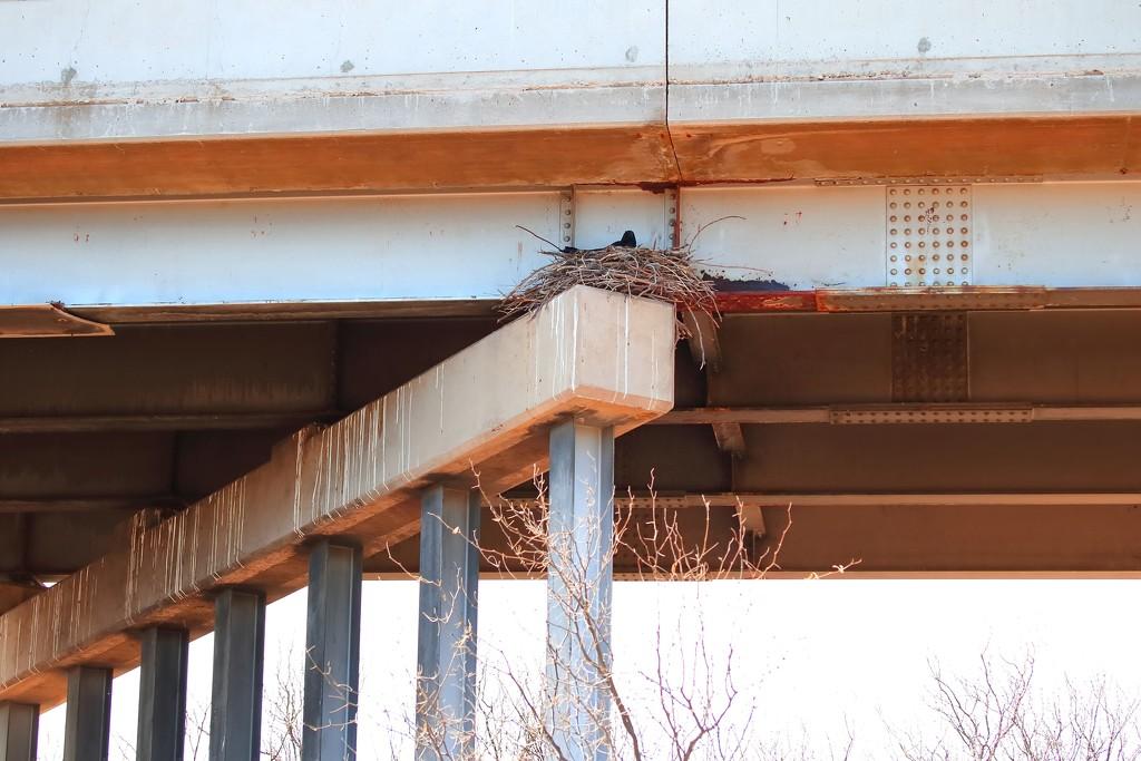 Raven nest by blueberry1222