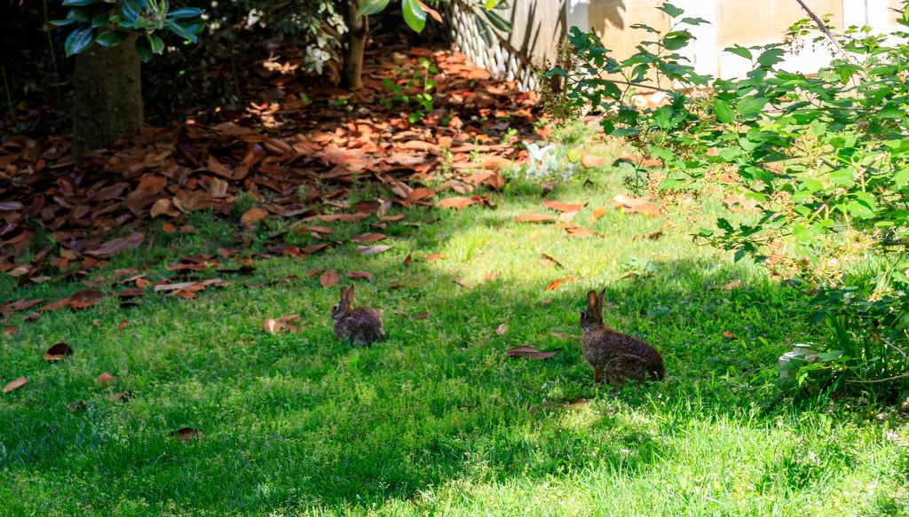 Our Nephews Backyard by hjbenson
