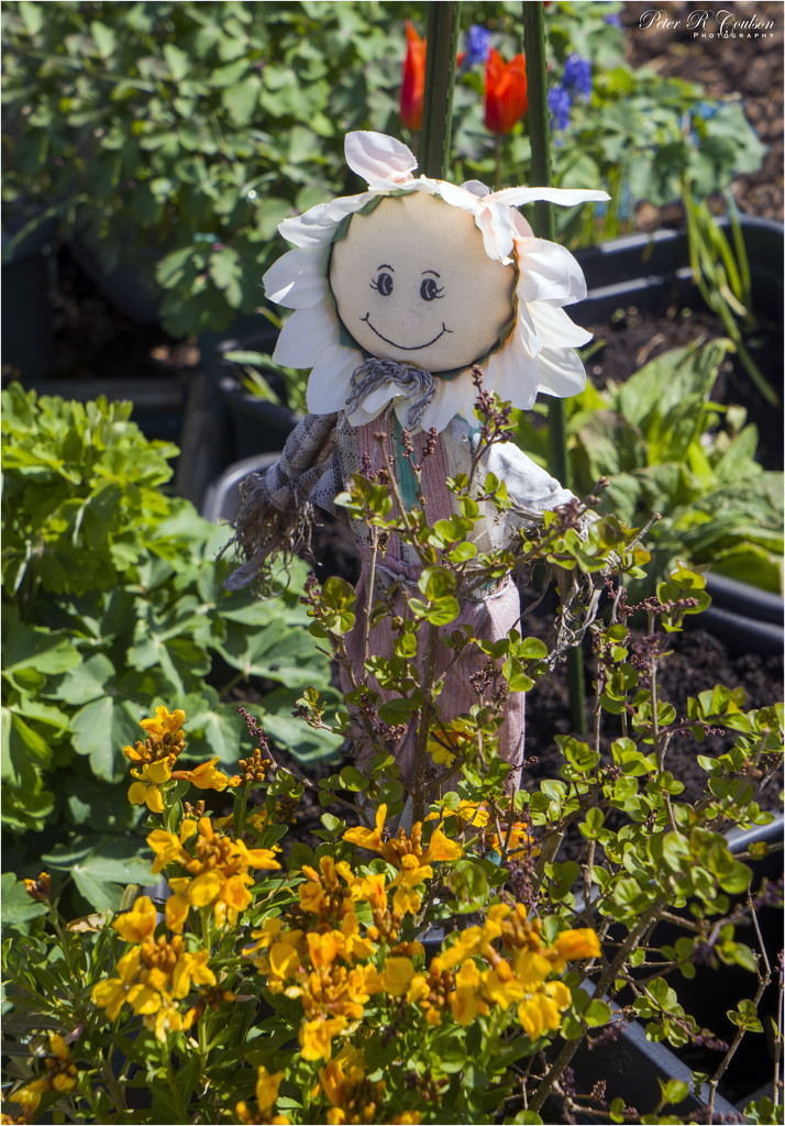Susan the scarecrow by pcoulson