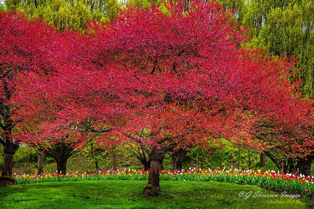 The Tulip Guardian by ggshearron