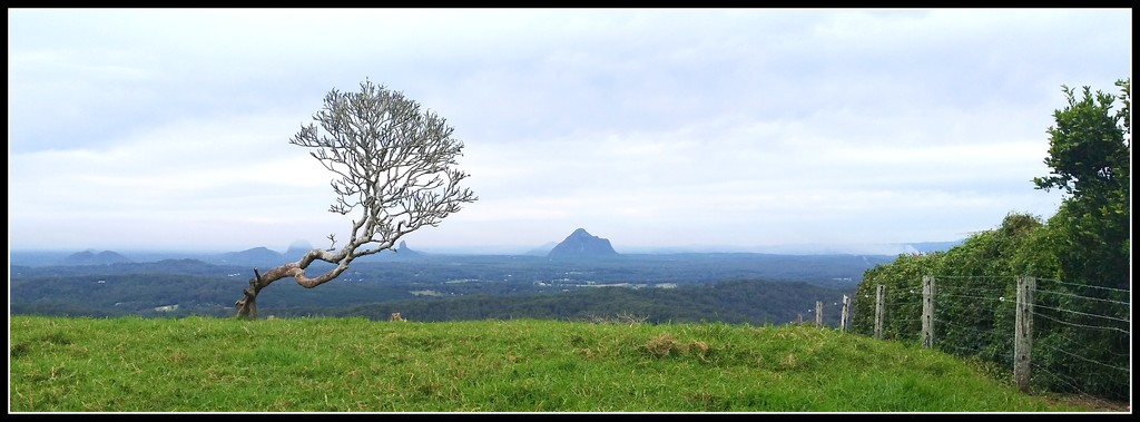 Glass House mountains in the background by 777margo