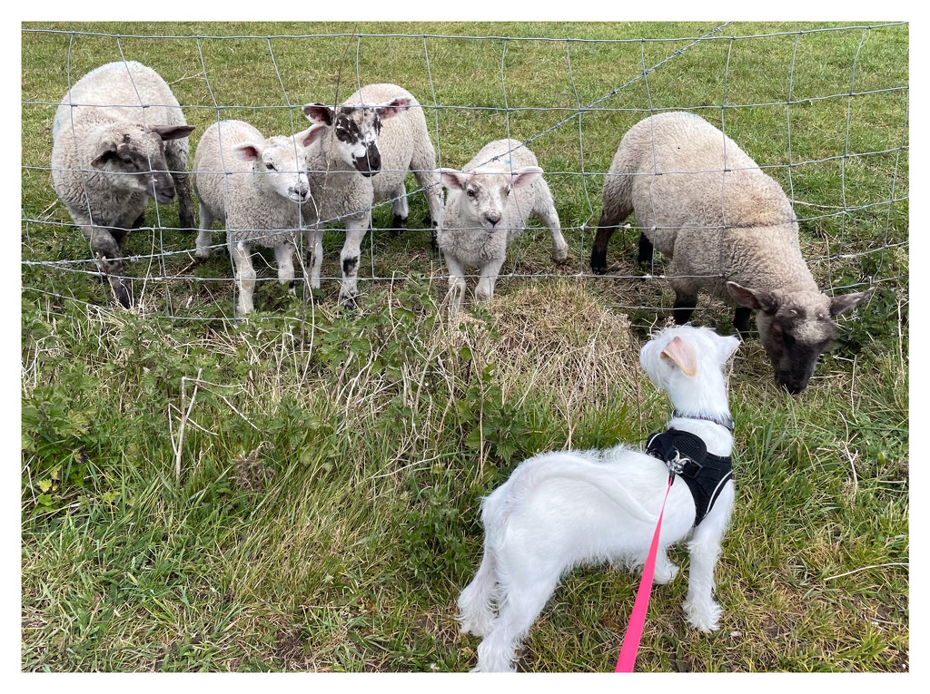 Winnie and the lambs by photopedlar