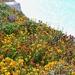 Clifftop 2
