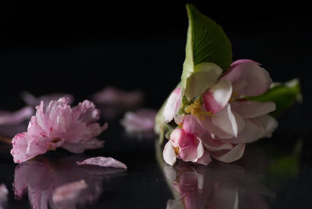 Windblown Blossom by 30pics4jackiesdiamond