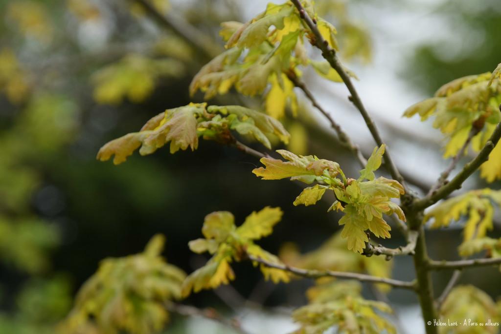 Oak by parisouailleurs