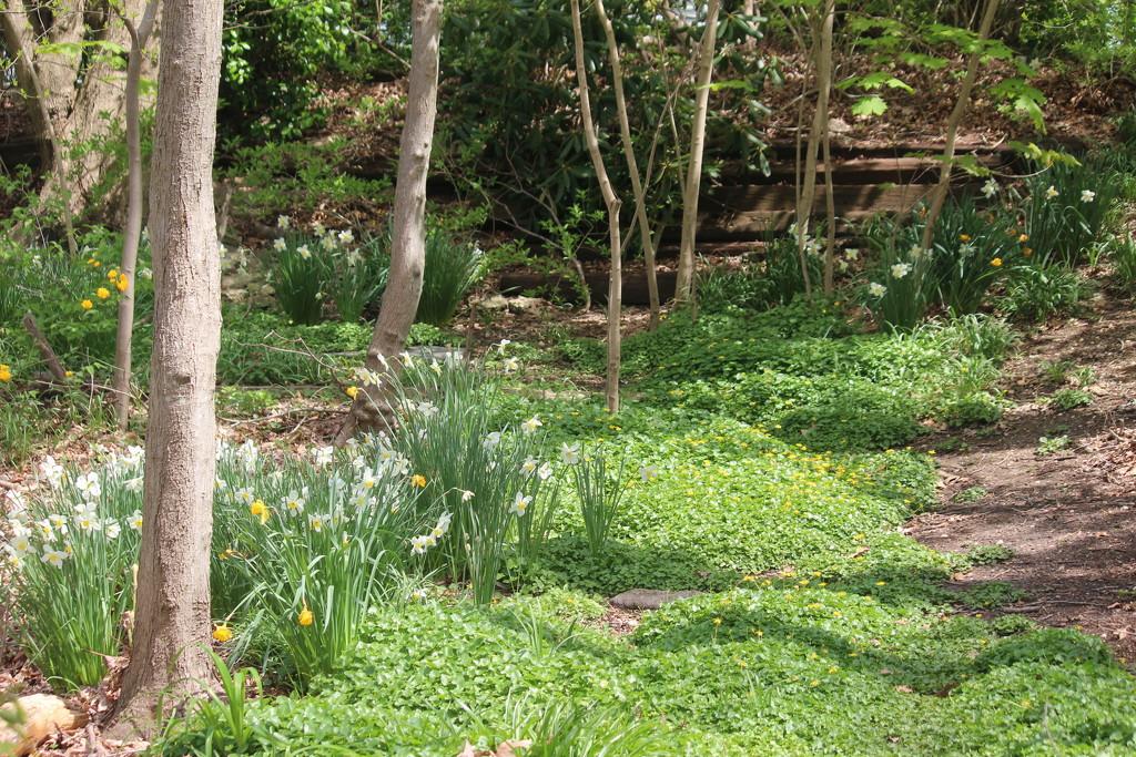 Secret Garden by jb030958