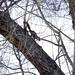 High Rise Squirrel Playground