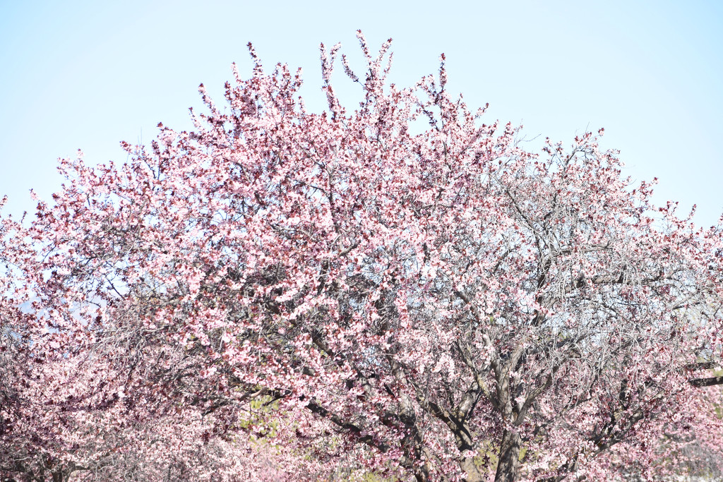 Spring Bursting Forth... by bjywamer