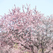 Spring Bursting Forth...