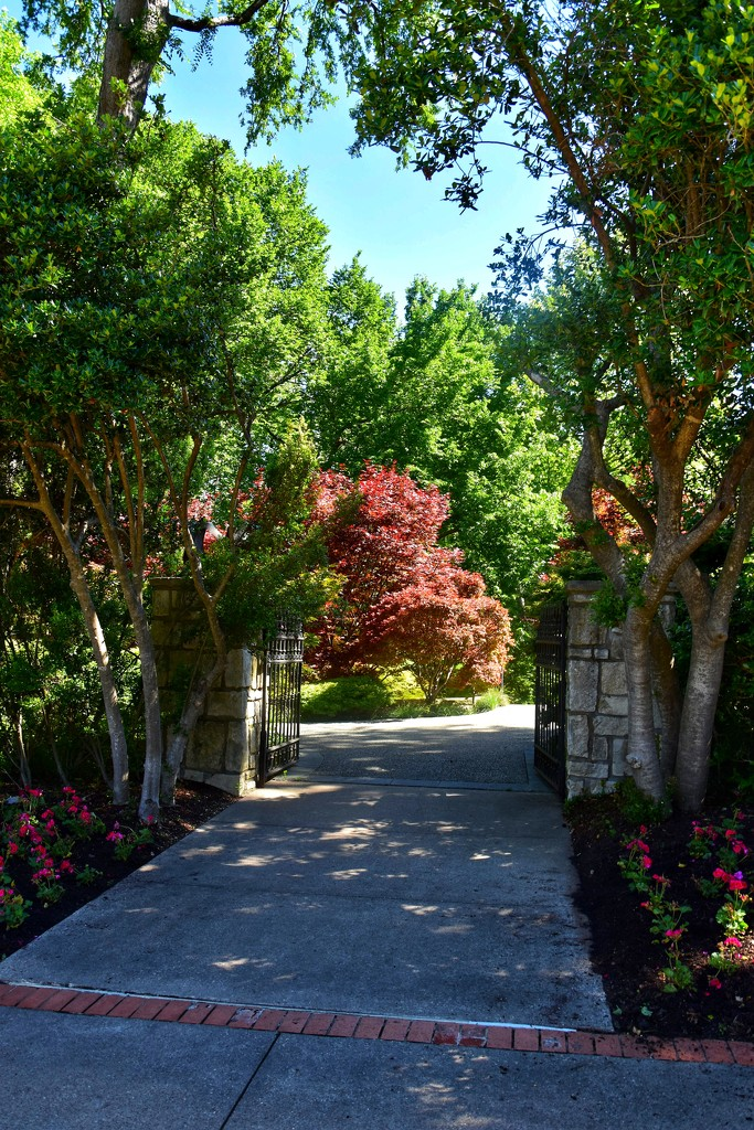 The Arboretum's secret gate  by louannwarren
