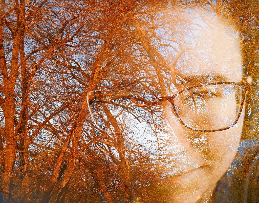 Tree Me II by toinette