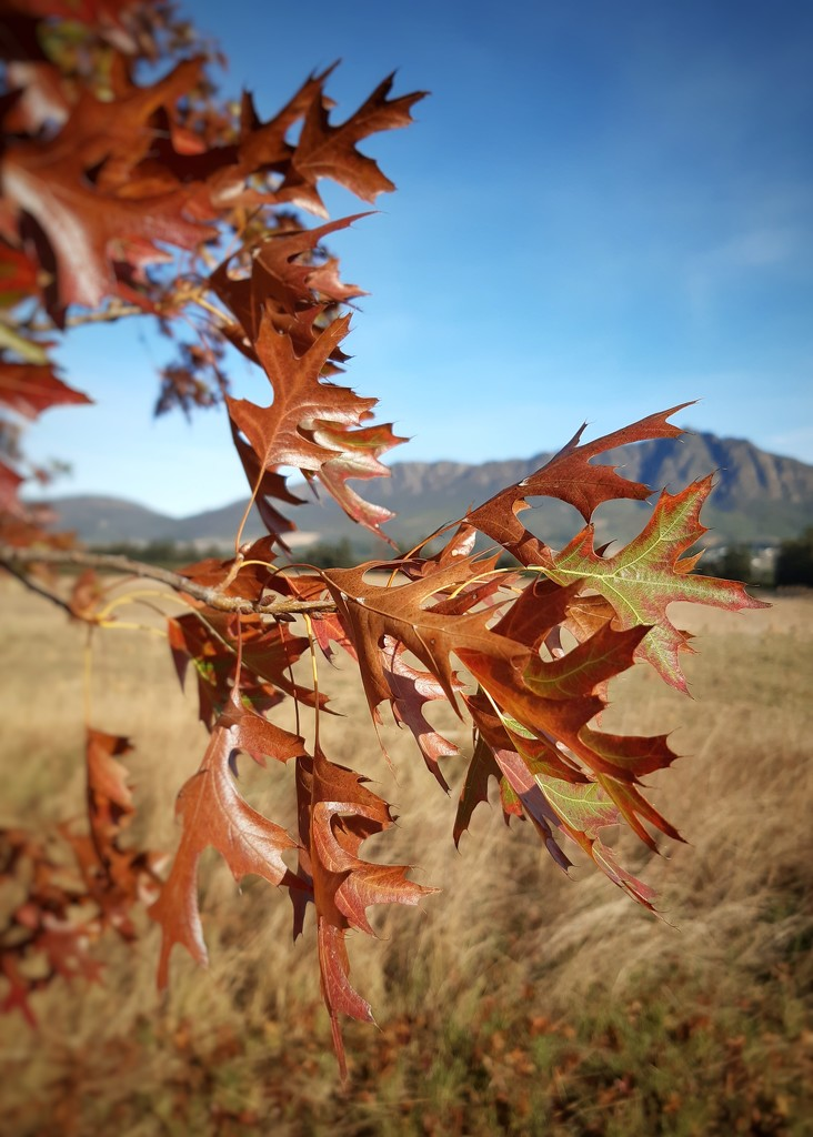 Autumn Leaves by salza
