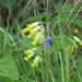 Roadside wild flowers