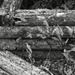 Old landscape timbers...