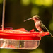 Hummingbirds Are Back!