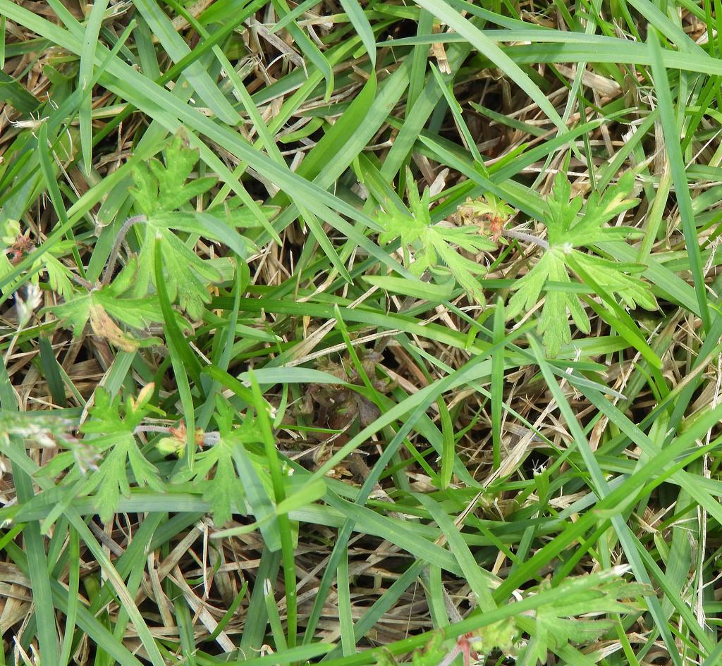 More weeds by homeschoolmom