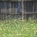 My wild yard