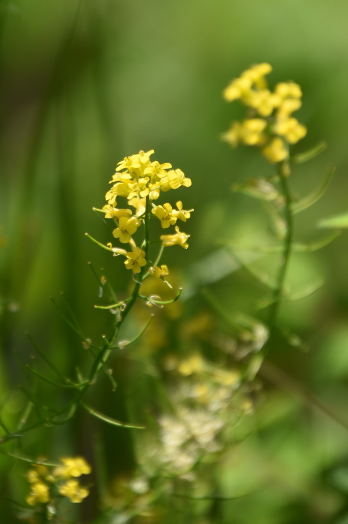Indian Creek Wildflowers by genealogygenie