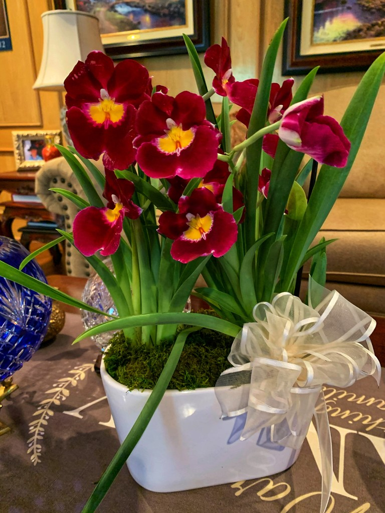 Milt orchids for Mother's Day  by louannwarren