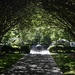 The Arboretum's Crepe Myrtle Allee