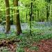 Green v. Purple