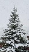 10th May 2021 - O Christmas Tree!