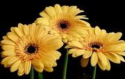 10th May 2021 - Yellow