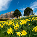Cancer Survivors Daffodil Garden