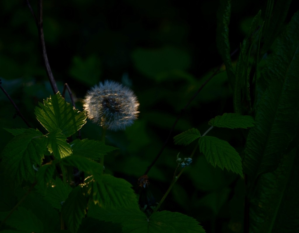 Last light by wakelys