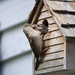 Mama Sparrow feeds her baby