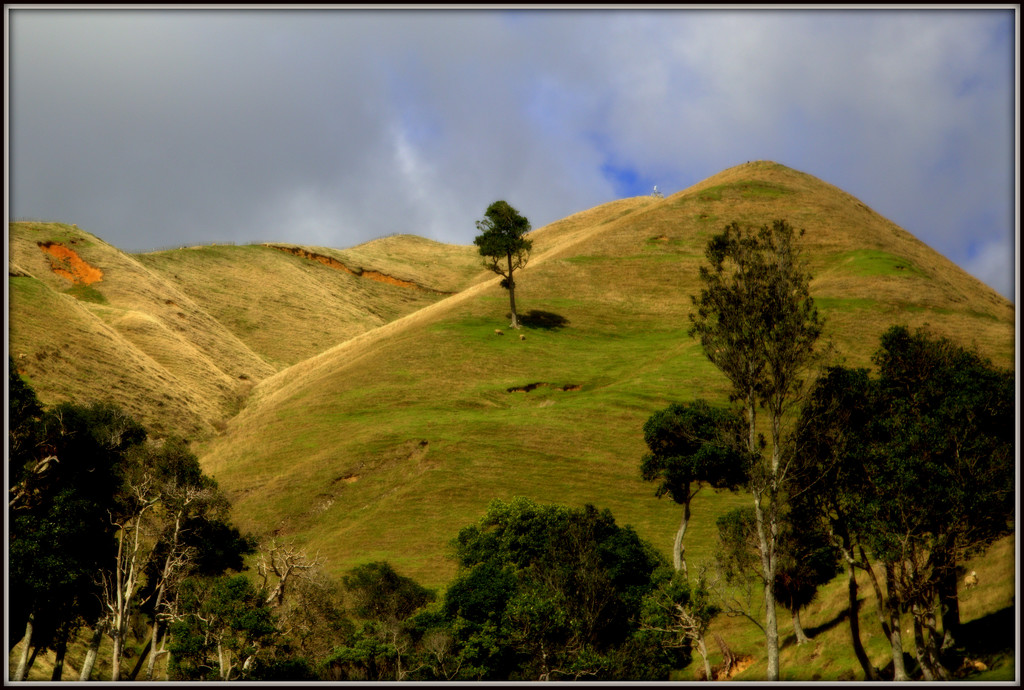 Waitomo hills by dide