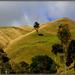 Waitomo hills