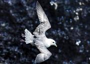 28th Apr 2021 - Gull at RSPB