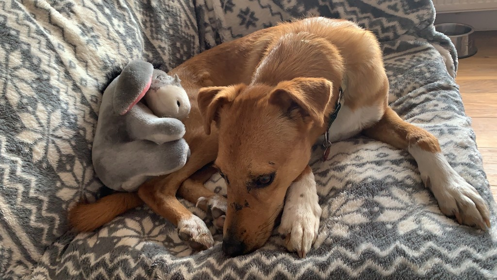 Ted & His Toy by alicats