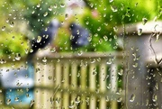 11th May 2021 - Raining cats and dogs !!