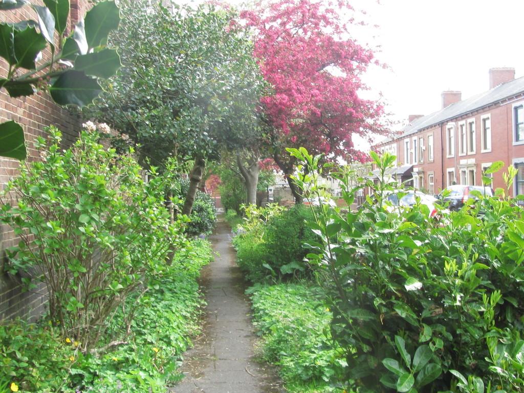 Path through the Church garden. by grace55